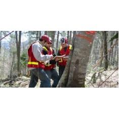Programme d'aménagement forestier