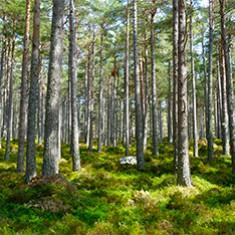 Forêt publique